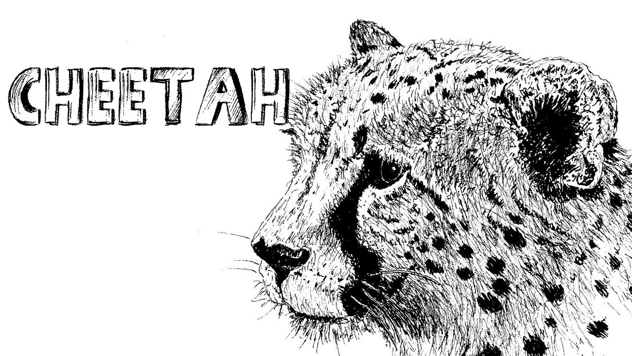 Uncategorized Draw Cheetah how to draw a cheetah in pen ink 1 youtube