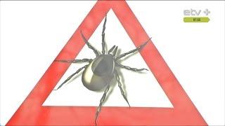видео Как избавиться от комаров и клещей на дачном участке?