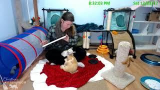 Jolene & the Country Music Kittens: Christmas Eve Eve Visit