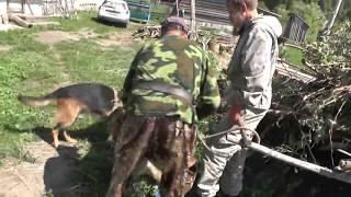 Вывезти ветки для костра.   Помощники - 2 собаки Сергея.  04. 08. 2018