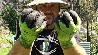 Watch This BEFORE Buying Garden Soil for Vegetable Patch