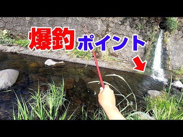 【田舎の川】100均竿で釣り対決やってみた
