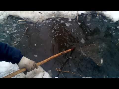Зимняя рыбалка сачком