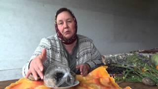 МУМИЕ ГОРНОГО АЛТАЯ || Полезные свойства и применение