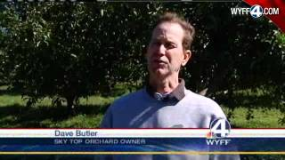 Apples Ripe For The Picking In North Carolina