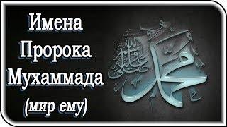 15 прекрасных имен Пророка Мухаммада (мир ему), о которых вы еще не знали
