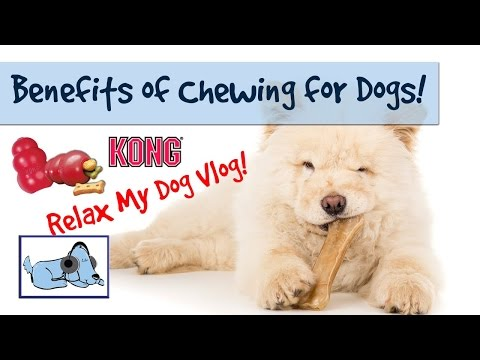 Benefits of Chewing for Dogs - Kong Toy Review! 🐶 #HEALTHVLOG06