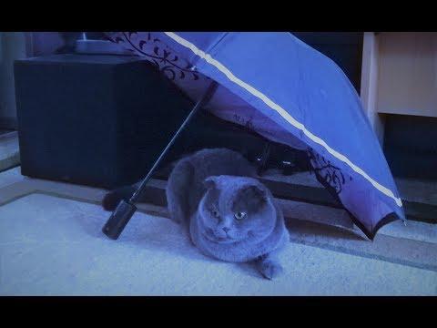 Вопрос: У каких пород встречаются коты черного окраса?