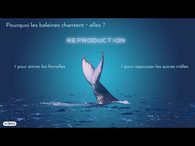 Analyse des chants des baleines à bosse dans l'océan indien
