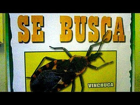 """Chagas Disease May Be the """"New HIV/AIDS"""" of the Americas"""