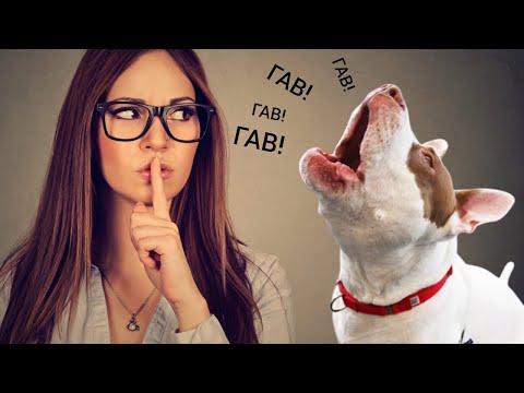 Как отучить собаку лаять без повода? 5 простых способов