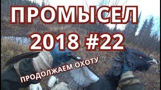 ПРОМЫСЕЛ 2018-2019 #22. ОХОТА НА ГЛУХАРЯ ПРОДОЛЖАЕТСЯ