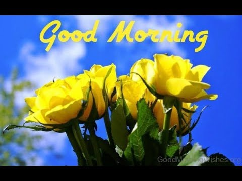 Good Morning Special Videogood Morninggood Morning Whatsapp