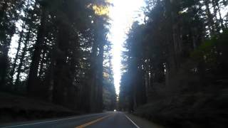 Oregon Scenic Drive through Redwood National and State Park | 2bearbear.com