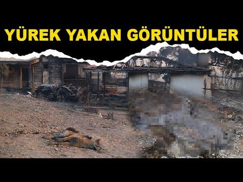 Manavgat'ta yürek yakan görüntü
