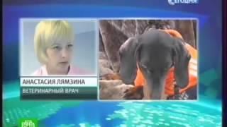 Живодёры накормили собак изониазидом