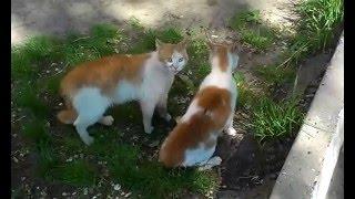 Весенние коты в Тирасполе