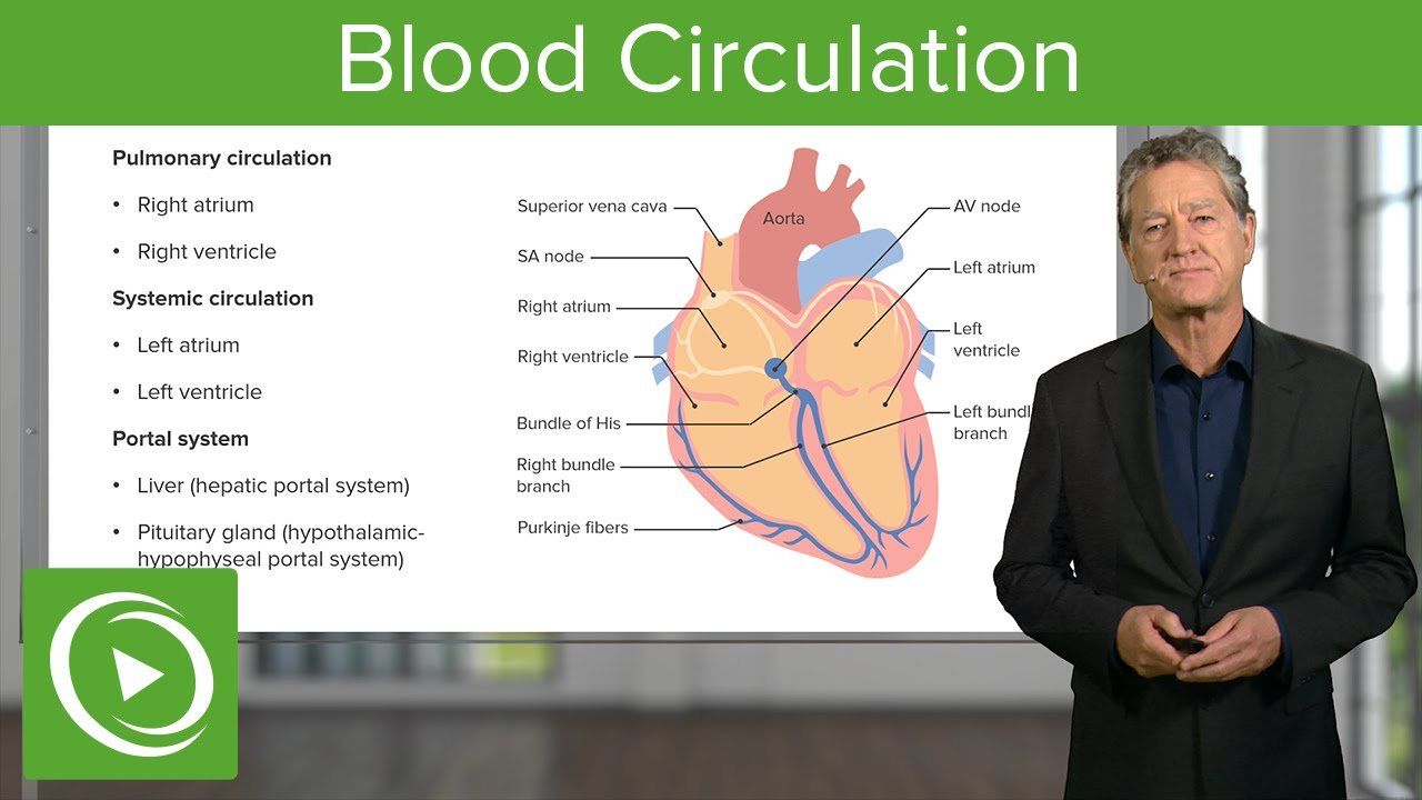 Blood Circulation: Pulmonary & Systemic  – Histology | Lecturio