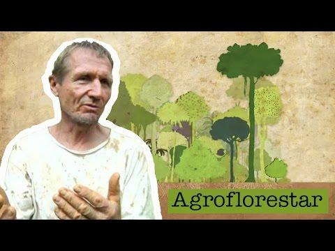 Agroflorestar: Semeando um mundo de amor, harmonia e fartura