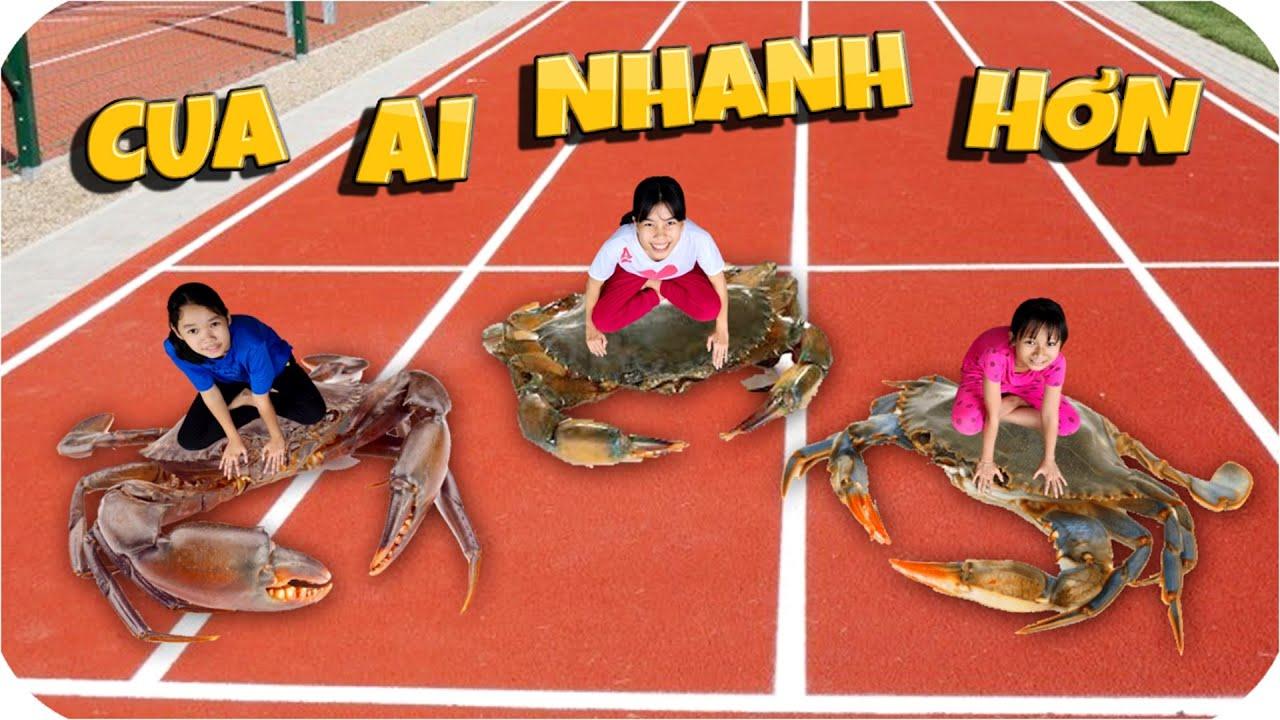 Tony | Đại Hội Chạy Đua Của Động Vật - Crab Race