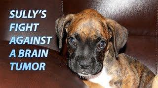 Dog with Brain Tumor: Symptoms, Diagnosis & Treatment | Week 1