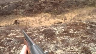 Охота на медведя с гладкоствольным ружьем видео
