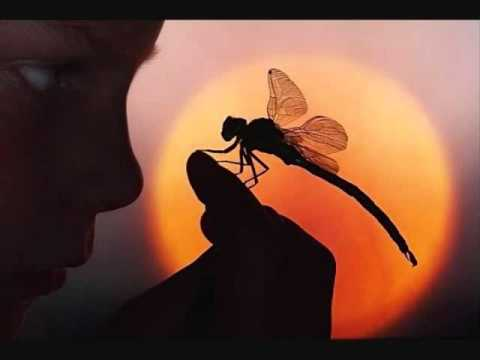 """Dragonfly"" (unplugged) Shaman's Harvest (Lyrics in desription box)"