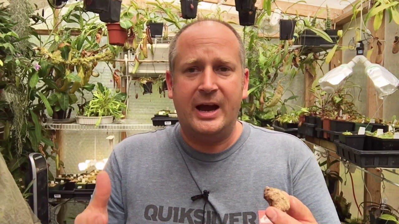 Praying Mantis Update Praying Mantis Babies Hatching 1080p Youtube