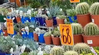 Австралия Товары для дачи, сада и огорода обзор цены Идеи для дома