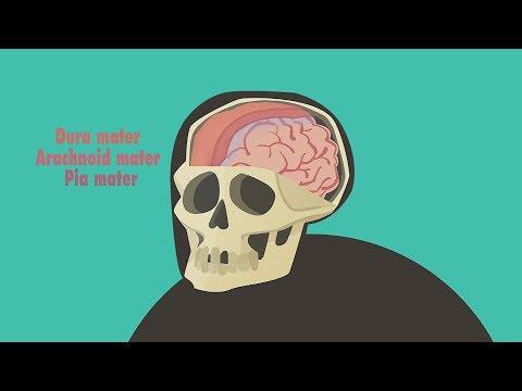 Как понять что у вас сотрясение мозга
