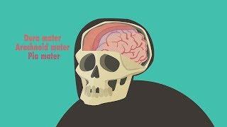видео Сотрясение мозга