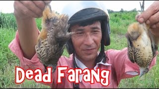 EAT OR DIE: Catching and Eating Birds in Cambodia