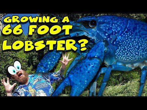 Amazing Growing Sea life - 66 Foot Lobser? How big will it grow