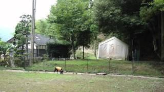 「sennen hund」 http://sennenhund.jp/ カメラを動かすのが早くて見づ...