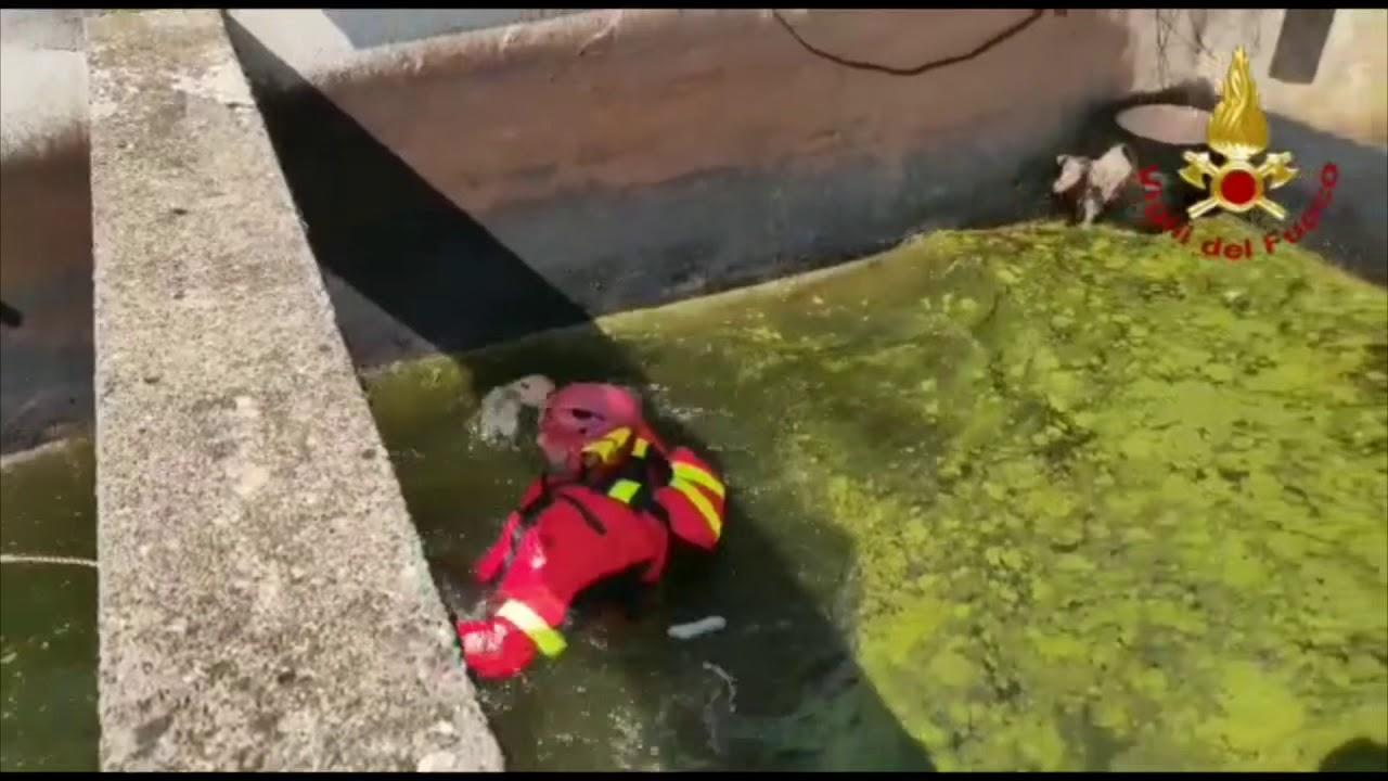 Intervento a Occhieppo inferiore per recuperare un cane caduto all'interno di vasche per tintoria