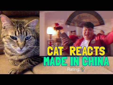My Cat Reacts To - Higher Brothers - Made in China
