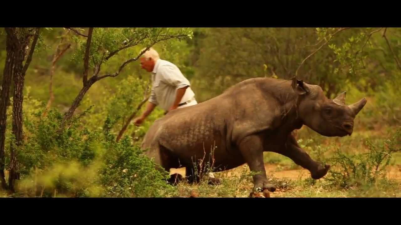 WWF - Rhino