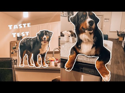 Bernese Reviews Food - Taste Test 1