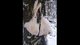 GoPro: Белые дороги...18+(Охота на зайца беляка с гончей... за которым ходил несколько раз, памятный - первый трудовой трофей. +18 Остор..., 2013-12-16T09:35:27.000Z)