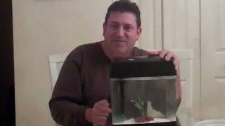 How To Keep Crayfish As Pets #1 ...do It Yourself