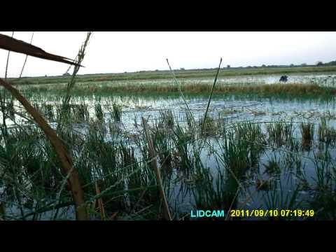 Teal Hunting 9/10/2011 In Eagle Lake, TX