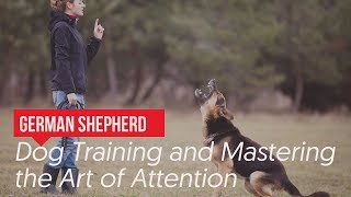 German Shepherd Dog Training and Mastering the Art of Attentio…