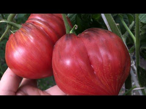 Обзор сортов томатов 2020 2 ч.