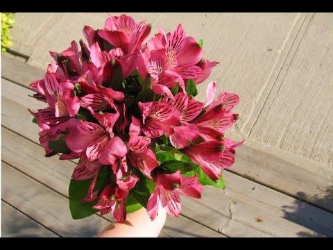 Wedding Bouquet Alstroemeria