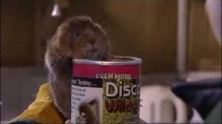 wildwood water vole rescue