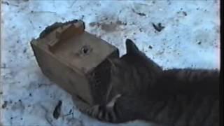 Приколы с котами# Кот ловит мышей из мышеловок и ест