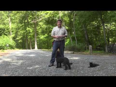 Winston Salem Puppy Training | Labradoodle Puppy Training | Cocoa