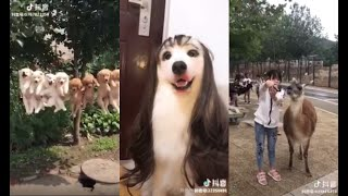 VIDEOS IN TIK TOK CHINESE DOUYIN FUNNY AND LOVELY ANIMAL