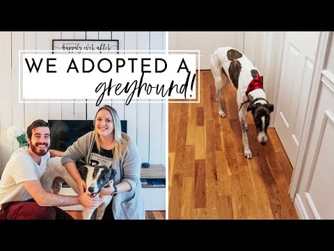 We Adopted A Greyhound! | Meet King | Adopting a Retired Racing Greyhound