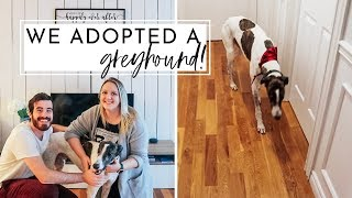 We Adopted A Greyhound! | Meet King 👑| Adopting a Retired Racing Greyhound
